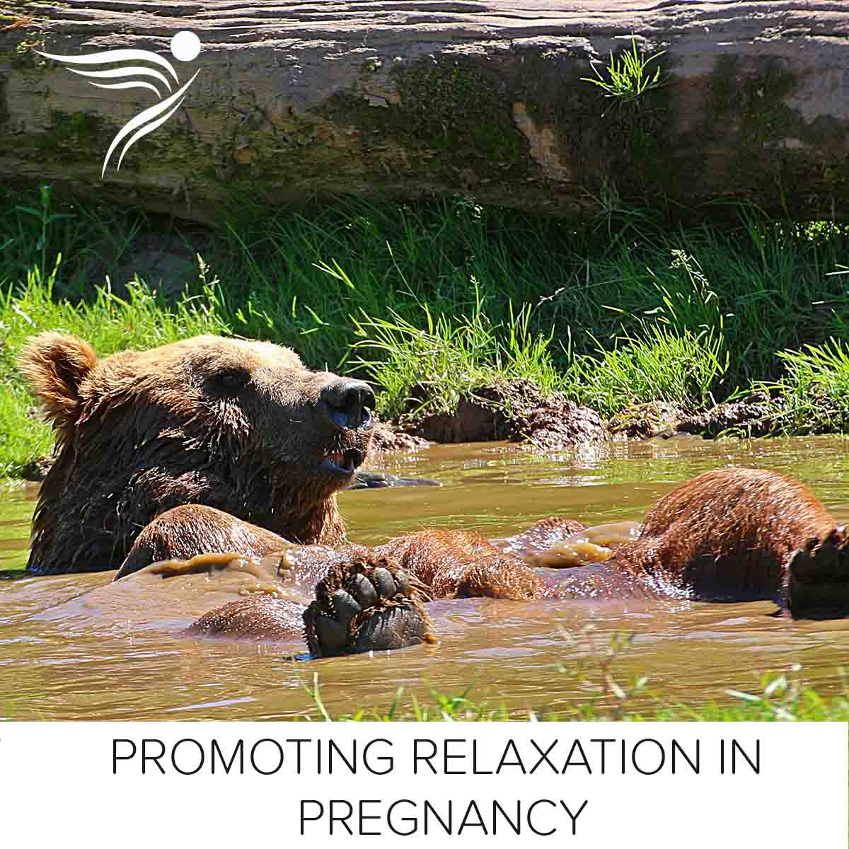 relaxed-bear-fb.jpg